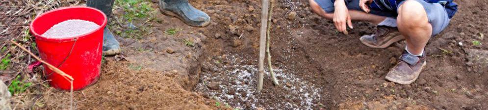 Подкормка саженца сливы азотным удобрением весной под корень