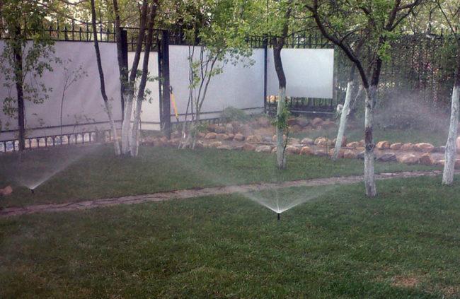 Полив сливового сада из дождевателя в период начала плодоношения