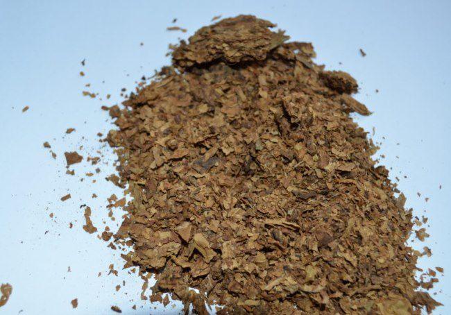 Горка сухих листьев табака для приготовления настоя от зеленой тли на сливе