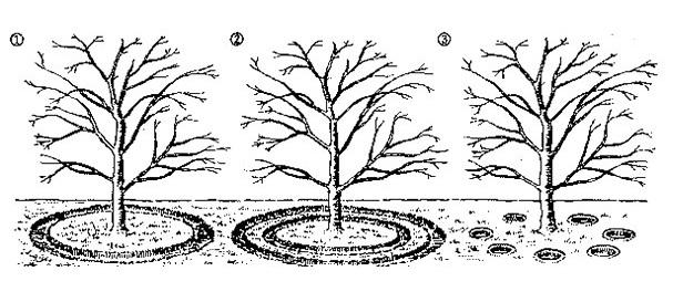 Схемы внесения подкормок в приствольный круг яблони во время цветения