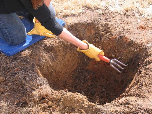 Выравнивание ручным рыхлителем стенок посадочной ямы для сливы