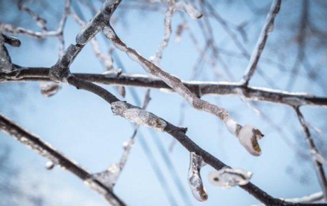Обледеневшие ветки сливового дерева без цветков ранней весной