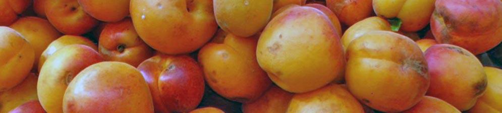 Плоды гибридного априума жёлтый абрикос спелые продаются на рынке