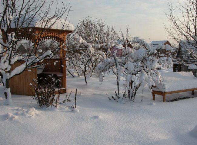 Дачный участок с плодовыми деревьями на Урале в середине зимы