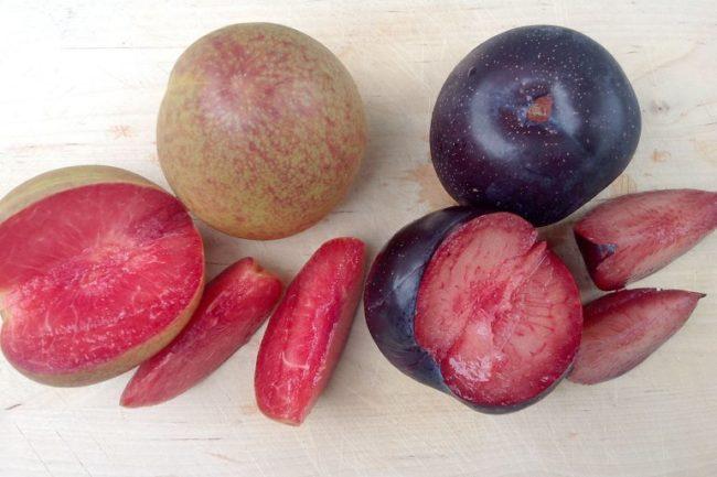 Красная мякоть гибридных плодов слибрикосов и целые фрукты разной окраски