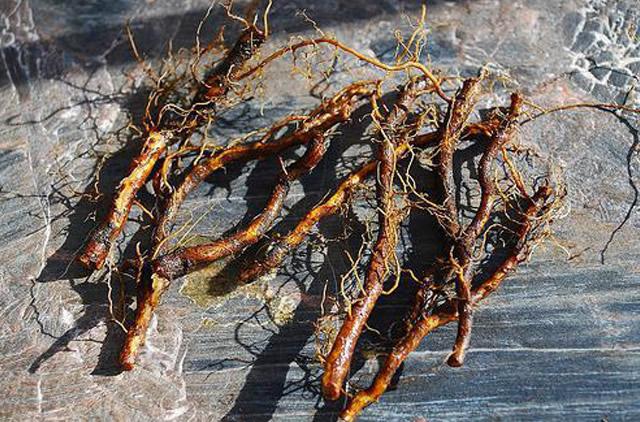 Корневые черенки сливы для размножения плодового дерева