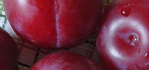 4 спелых сорванных плода сорта Неженка на столе