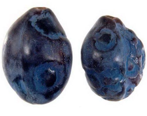Типичные признаки поражения сливы оспой на поверхности плодов