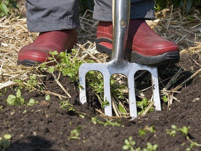 Перекопка почвы приствольного круга сливы после внесения минерального удобрения