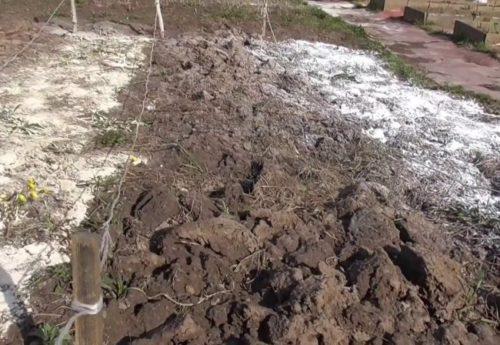 Перекопка поверхности почвы с внесением доломитовой муки в осенний период