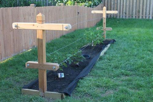 Самодельная шпалера с деревянными столбами для выращивания ежевики