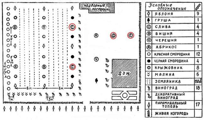 Схема посадки сливы в плодовом саду на территории загородного участка