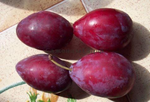 Четыре темно-бардовых плода сливы гибридного сорта Алексий грушевидной формы