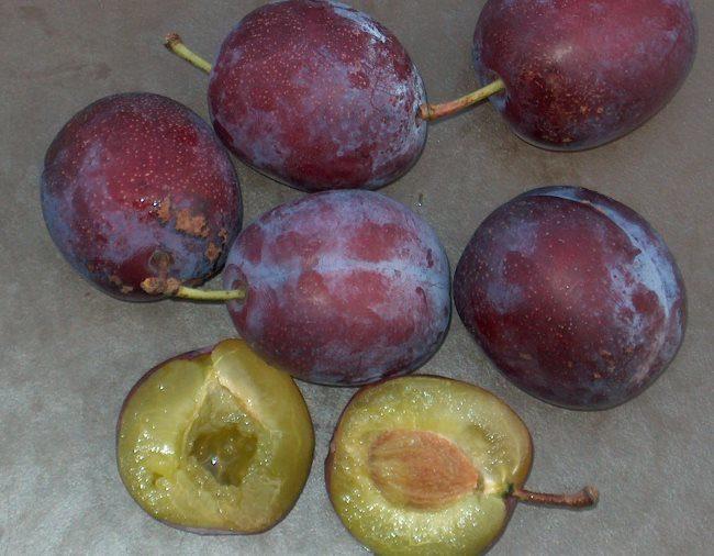 Внешний вид крупных плодов и сочной мякоти сливы гибридного сорта Аннушка