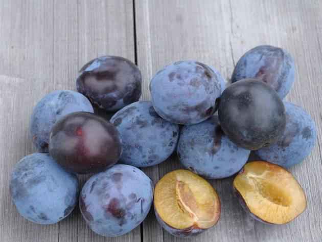 Внешний вид темных плодов и светлой мякоти сливы сорта Тульская черная