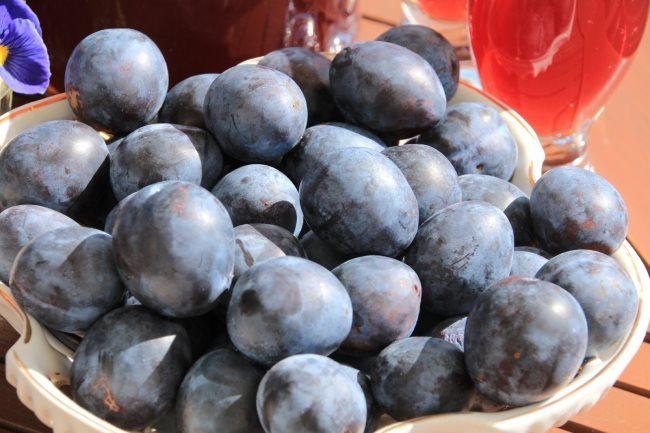 Плоды средней величины сливы Тульская черная в фарфоровой чашке