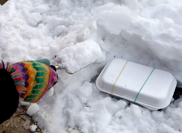 Стратификация косточек сливы под снегом в естественных условиях