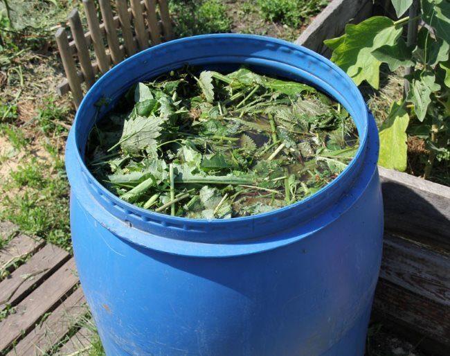 Пластиковая бочка с травяным настоем сорняков для подкормки сливы летом