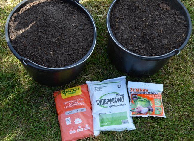 Перегной в ведрах и минеральные удобрения в пакетах для посадки саженца сливы