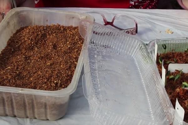 Емкость с опилками для стратификации сливовых косточек в холодильнике