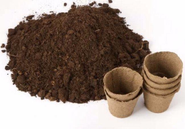 Плодородный грунт для посадки ежевики семенами в торфяные стаканчики