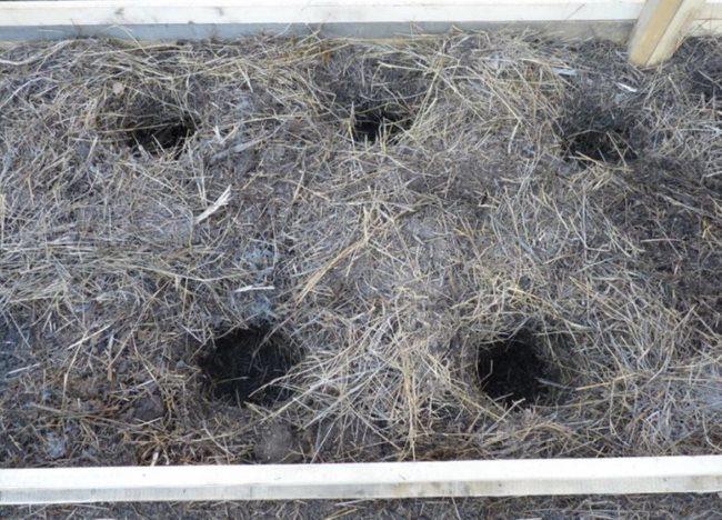 Подготовка лунок для рассады огурцов в ленивой грядке на растительных отходах