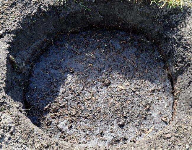 Посадочная яма с питательной смесью для пересадки сливы из горшка