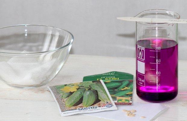 Подготовка водного раствора перманганата калия для обеззараживания семян огурцов
