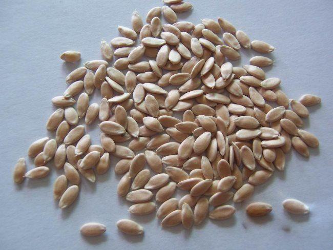 Отобранные для посадки в домашних условиях семена огурцов гибридного сорта