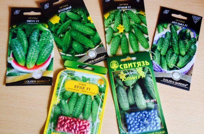 Шесть пакетиков с семенами огурцов для выращивания в условиях открытого грунта