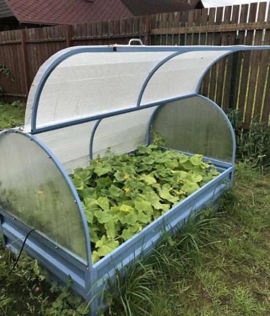 Парник из поликарбоната для выращивания огурцов при низких температурах