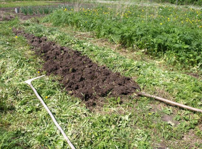Перекопка вилами грядки для посадки огурцов в открытом грунте