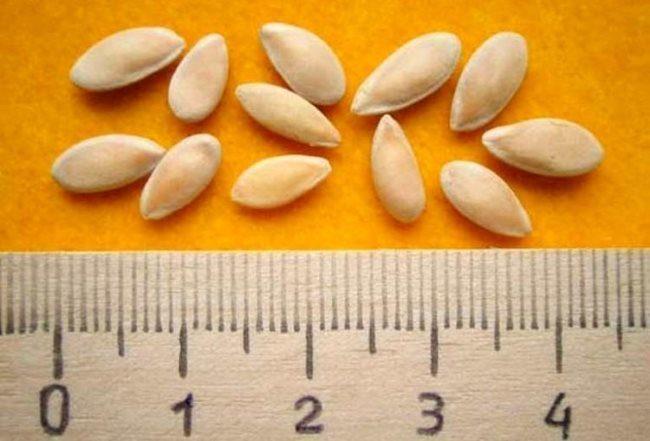 Размеры крупных семян огурцов для посадки в защищенный парник