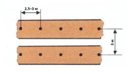 Рекомендуемые расстояния между кустами ежевики при посадке на дачном участке