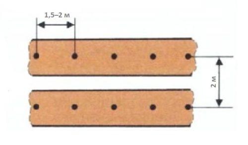 Схема размещения кустов ежевики пряморастущего вида при посадке в открытом грунте