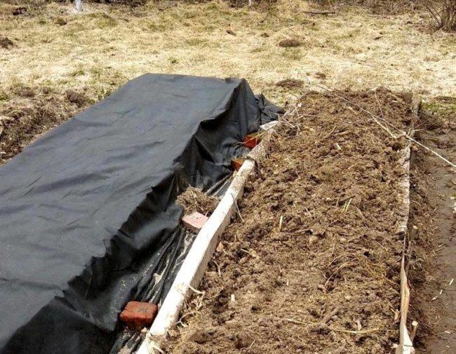 Приподнятая над землей теплая грядка для высадки огурцов в открытый грунт