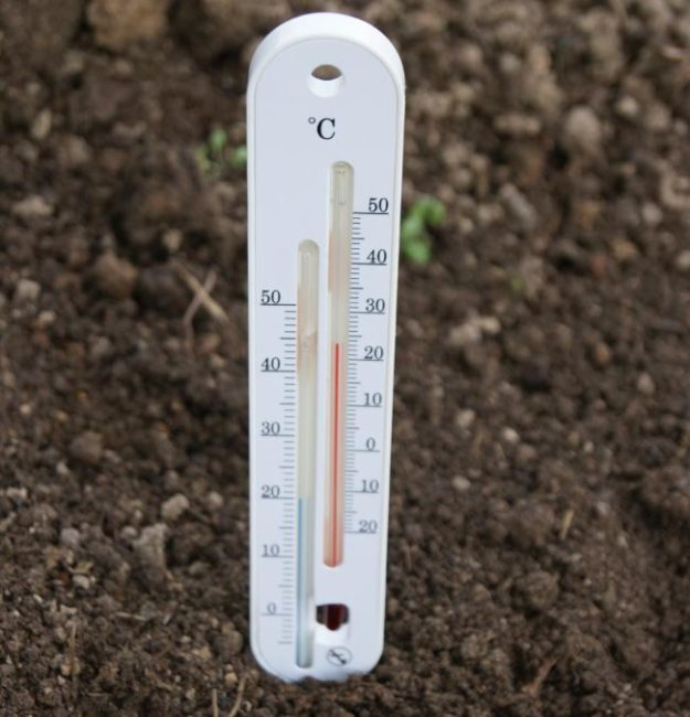 Измерение температуры почвы термометром перед высадкой рассады огурцов