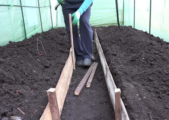 Устройство деревянных бортиков для огуречной грядки в теплице