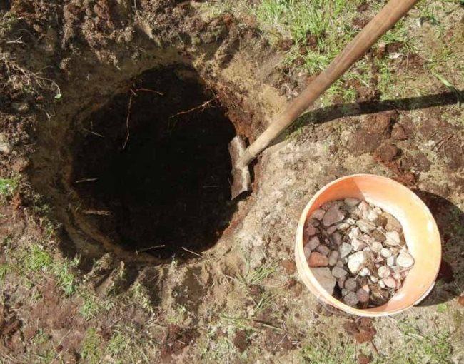 Пластиковое ведро с камнем для организации дренажного слоя в посадочной яме