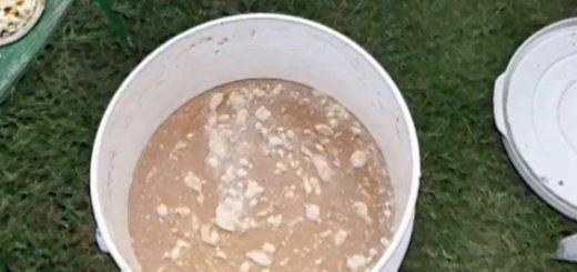 Приготовленная дрожжевая подкормка в таре из белого ведра