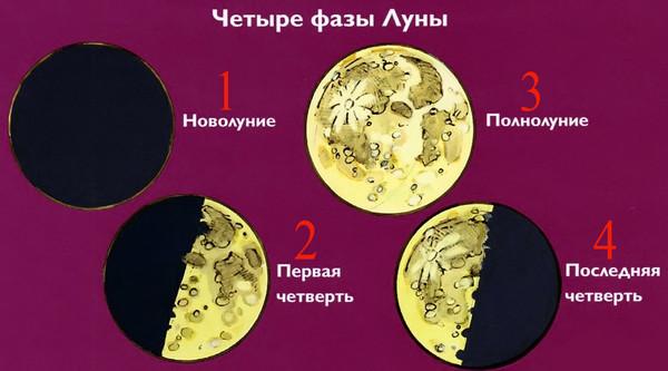 Схема с изображением полнолуния и других фаз луны для огородника