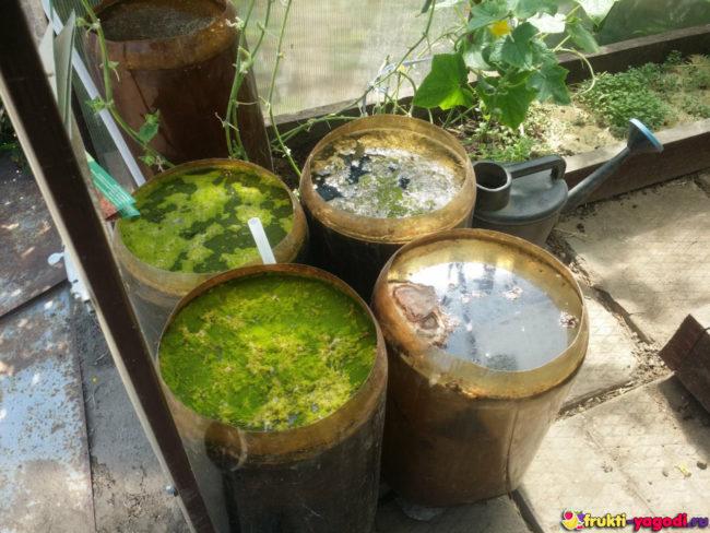 Ёмкости для приготовления натурального удобрения для огурцов