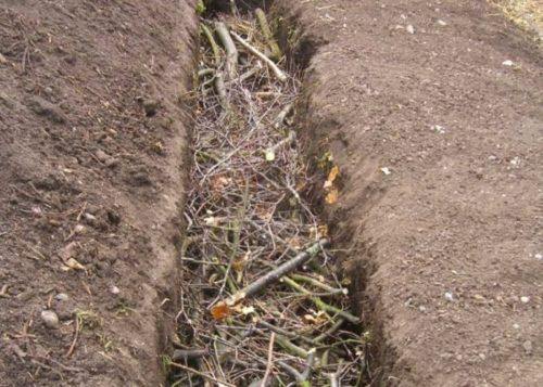 Закладка растительного материала на дно заглубленной грядки для огурцов