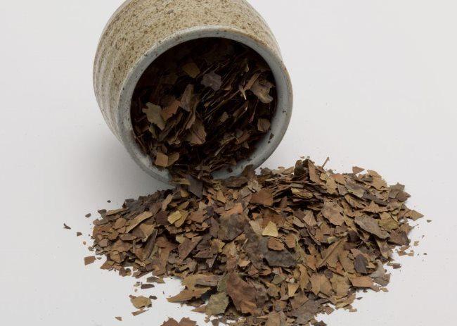 Засушенные листья дурмана обыкновенного для приготовления отвара от паутинного клеща