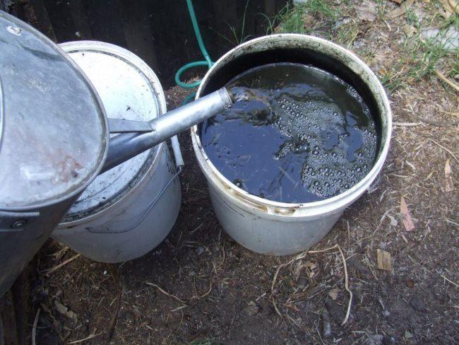 Заливка чистой водой из лейки куриного помета в пластиковом ведре
