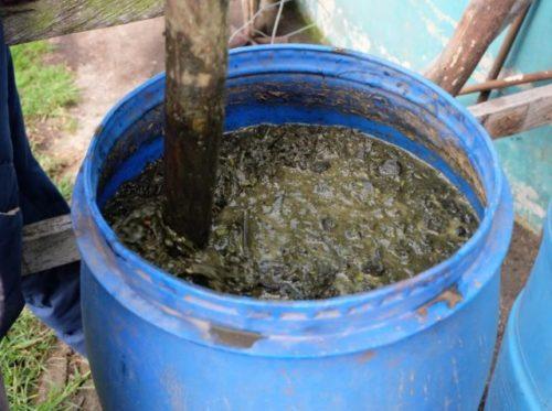 Пластиковая бочка с настоем навоза для подкормки огурцов в период плодоношения