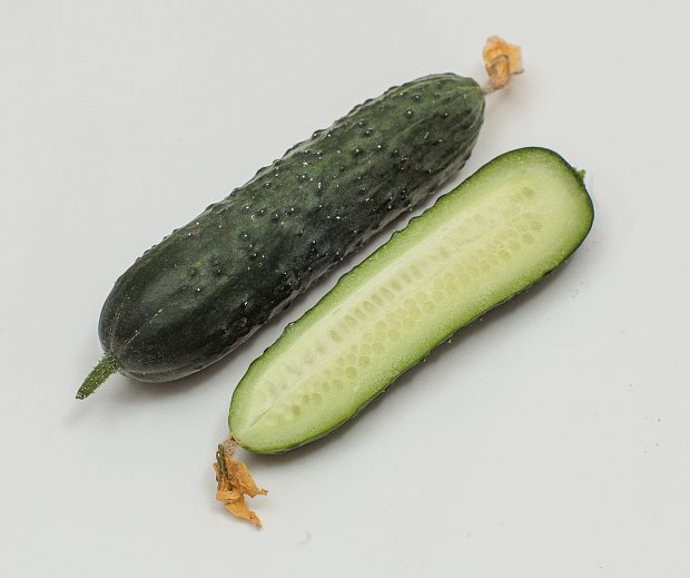 Разрез крупного плода огурца сорта Гуннар F1 гибридного типа