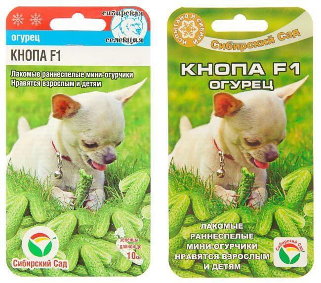 Упаковка с семенами огурцов Кнопа F1 для выращивания в теплице из поликарбоната