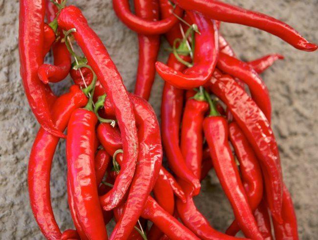 Красные стручки острого перца для приготовления настоя от садовой тли