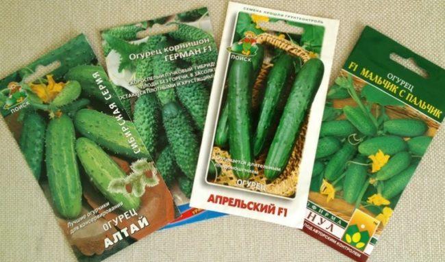 Бумажные пакетики с семенами огурцов для выращивания в открытом грунте